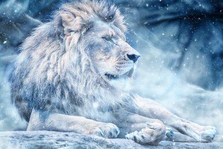 Quelle est la personnalité des Lions ?