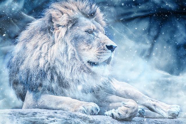 lion astro