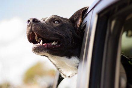 Comment entrer en communication avec votre animal ?