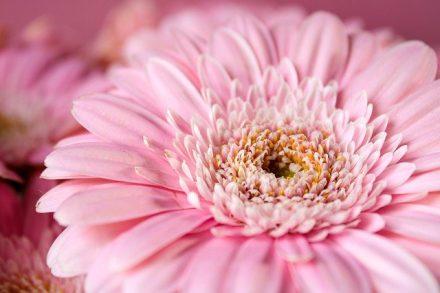 fleur confiance