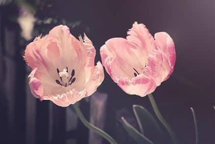 Quelles fleurs offrir selon le signe astro ?